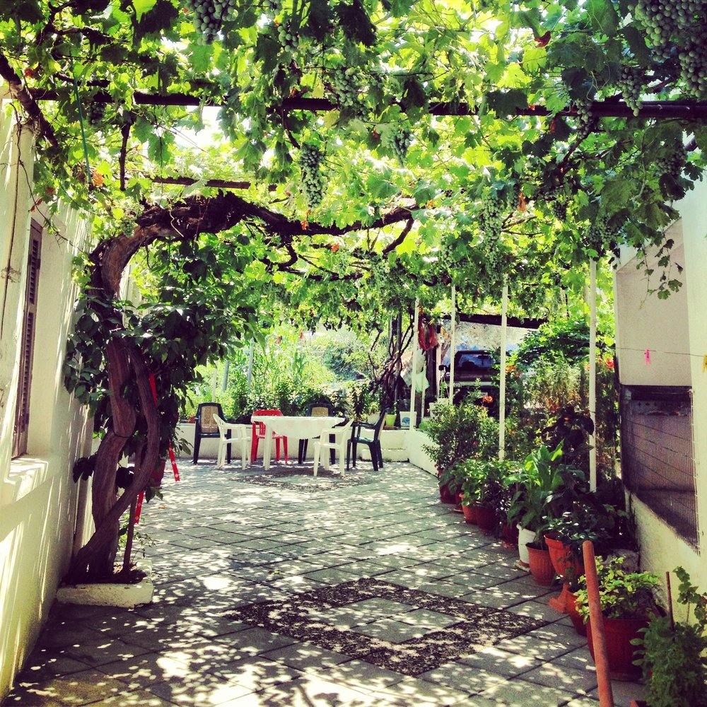 """Next for this group I show you the patio at our house. It's very common all over Greece to see patios and shaded areas that are made grown from Grapevines or other flowering vines. We use these grapes to make our very own """"Tsipouro"""" in Greek, or many may know it as Grappa or just Moonshine. This vine was planted in 1950 when my Grandparents finished building the house we currently still live in today."""