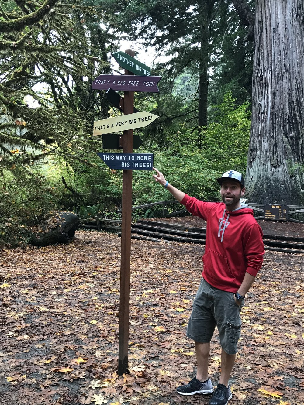 Hike Five: Redwood NP is surrounded and weaves in and out of some amazing state parks. Hit some of the groves in  Prairie Creeks Redwoods State Park.