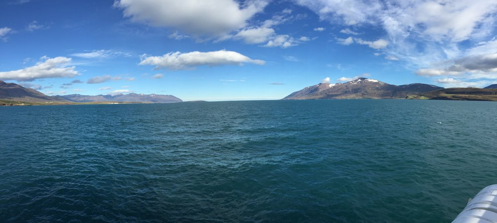 The view from our boat during Whale Watching in Akureyri with  Ambassador!