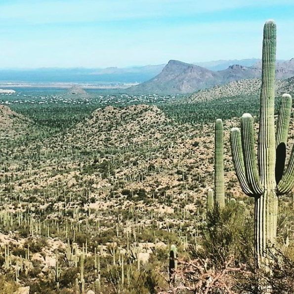 3. The John Norris Trail in  Saguaro National Park  is a cacti lover, and hiking lover's, dream! I trekked about 10 miles on this trail and could have done more but wanted to see other parts of the park. Miles of trails in this hot region is perfect for winter hiking. It's a small but incredible park!
