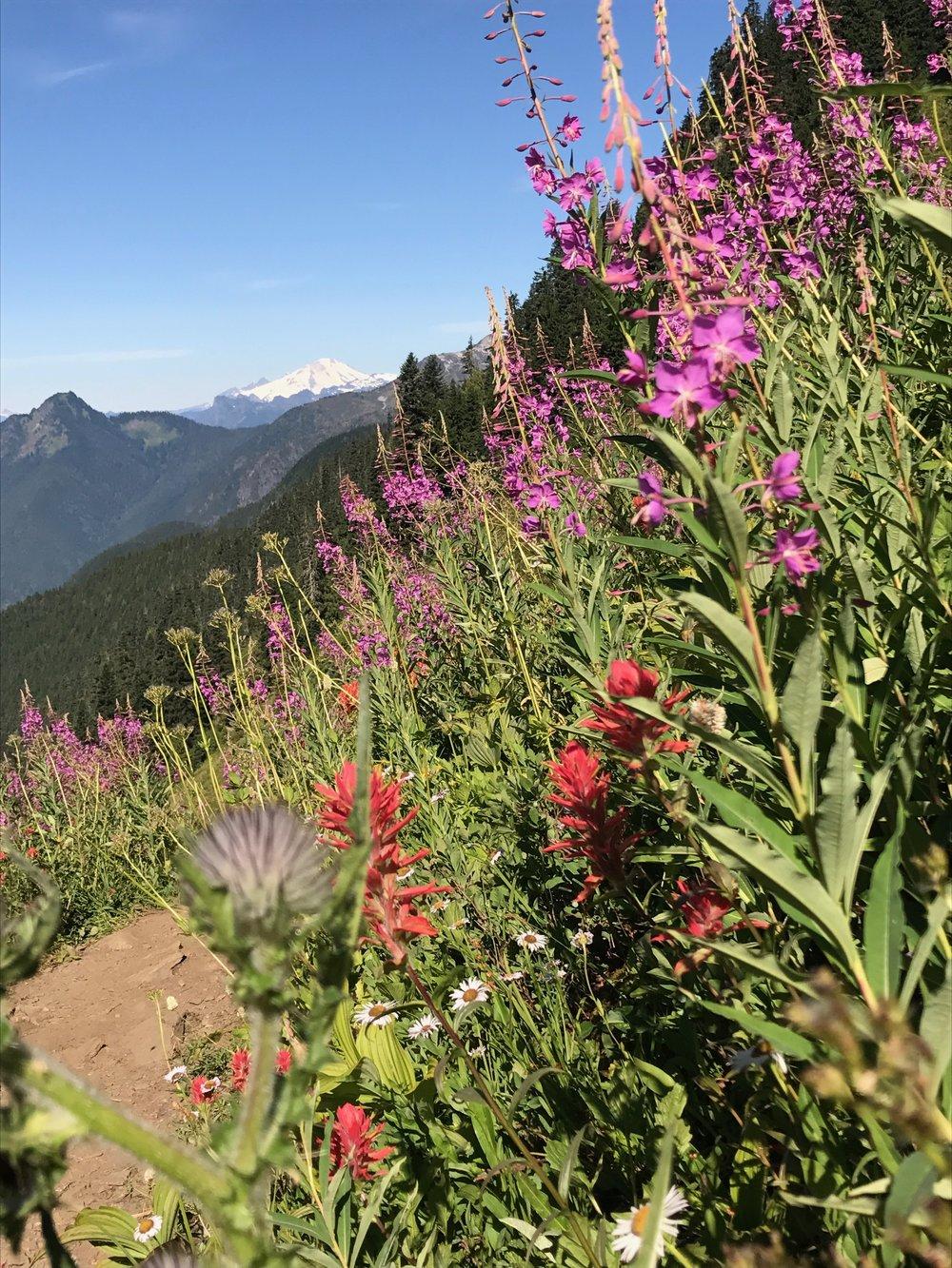 Northern Cascades - Hidden Lake Trail.jpg