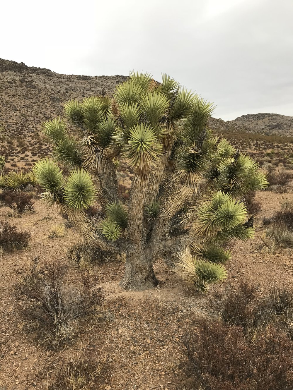The Willow Springs Loop offers a relatively flat hiking trail that will allow you wonderful views of cacti like this!  For the more adventerous folks there is a mountain bike trail option to ride!