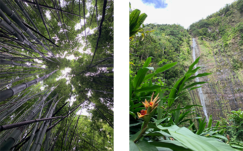 The Pipiwai Trail includes a gigantic banyan tree, an enchanting bamboo forest and Waimoku Falls.