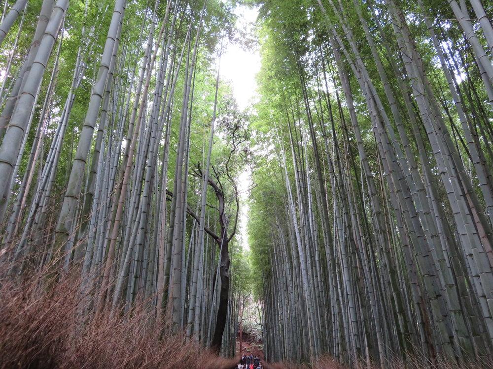 The Arashiyama Bamboo Grove near Kyoto.