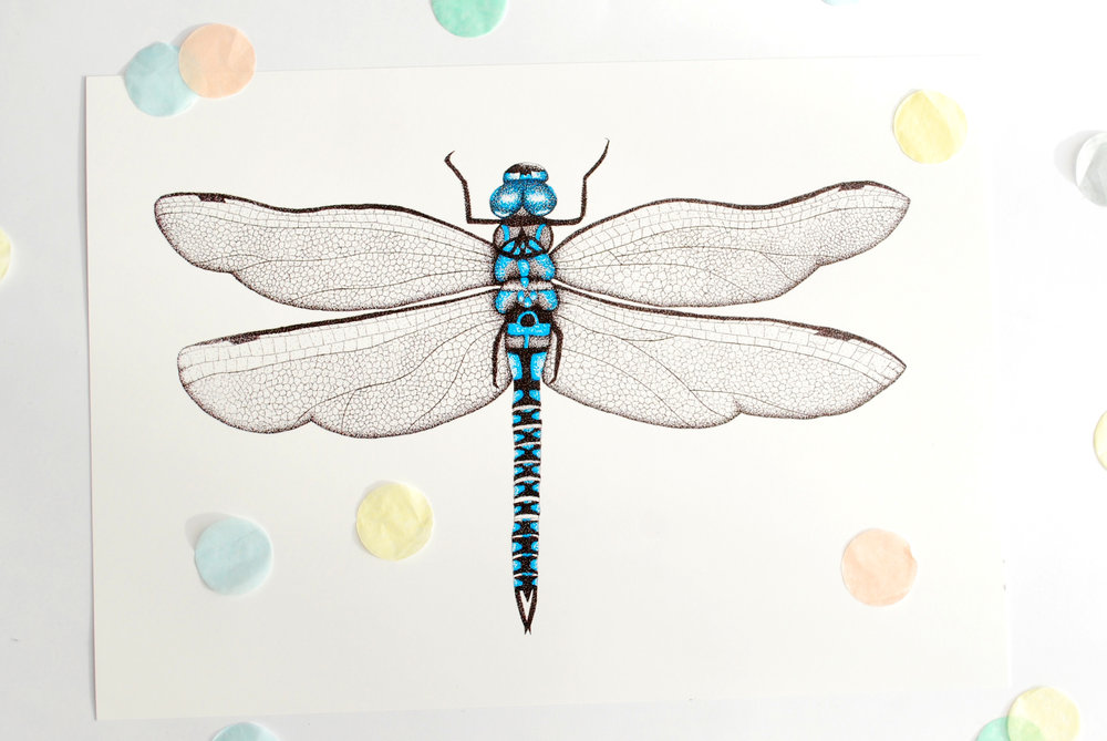 A4DragonflyPrint.jpg
