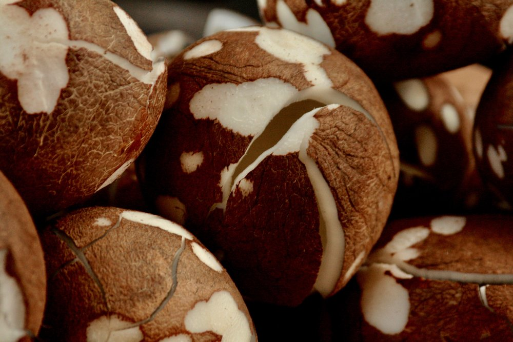 Things-Vietnam Coconuts.jpg