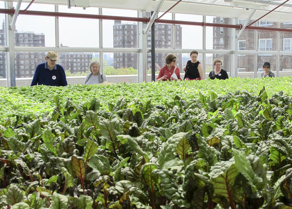 Agritecture consulted this rooftop hydroponic farm in The Bronx, NY on how to boost its operational efficiency and reach higher yields. -