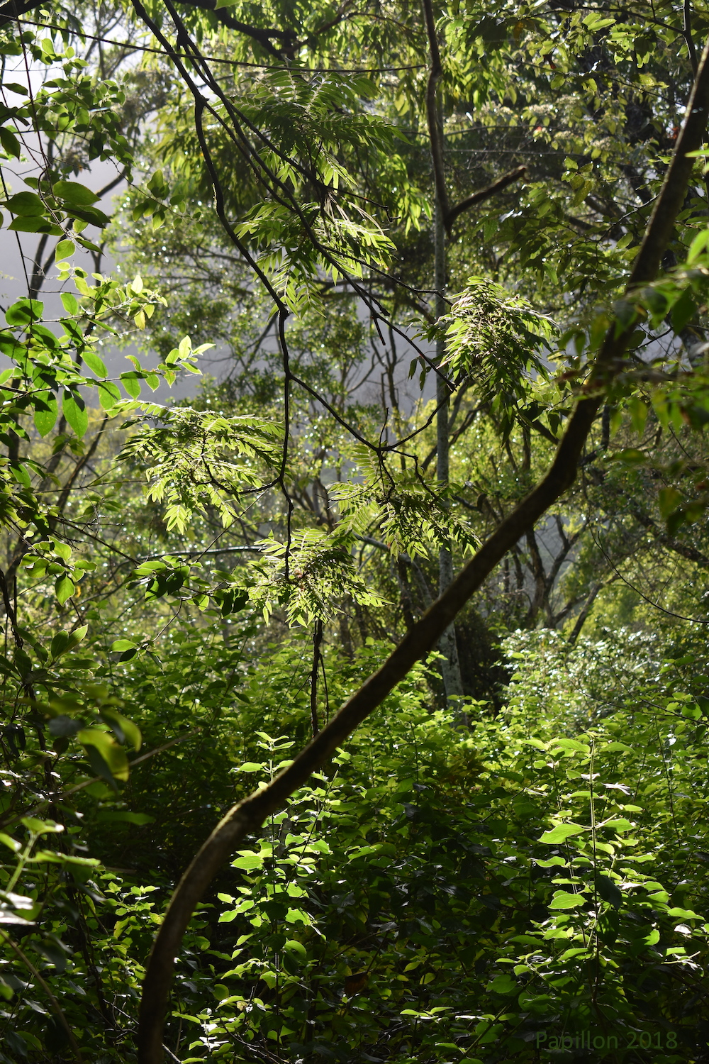 The first thing I see when I open my eyes in the morning is sunlight filtering through dense green foliage.