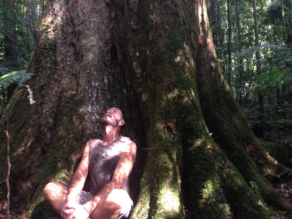 At exactly the time Thoreau was writing  Walden  my Great Great Great Grandfather was living the Big Scrub cutting down these magnificent and ancient red cedars ( Toona ciliata ). I prefer to hug them.