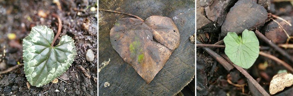 Composite_hearts.jpg