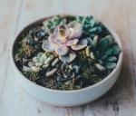 succulent4.jpg