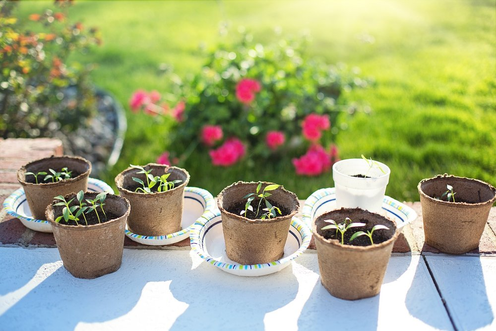 Copy of seedlings-2708679_1920.jpg