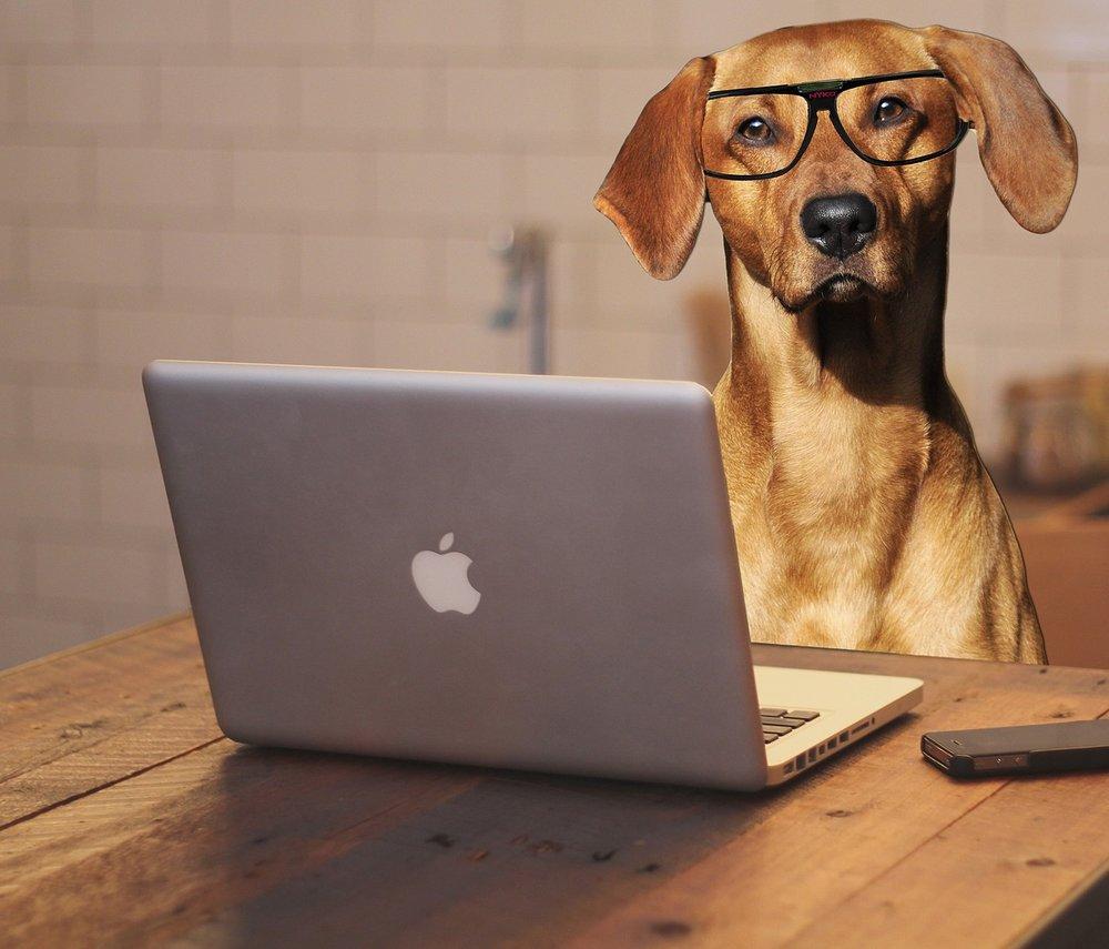 Copy of dog-2983021_1280.jpg