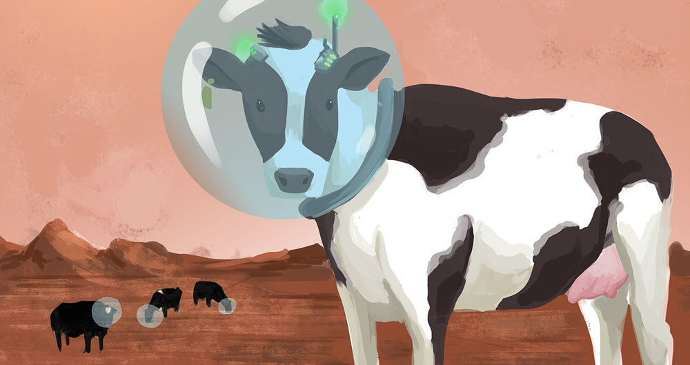 we won't see cows on the surface of Mars anytime soon, rather, they will inhabit dedicated facilities in Huacheng, Tiangong and Osumi.  Other colonies will be eagerly observing the outcome of this  new program. Suppliers of the genetically engineered bovine claim the load on resources fall within the same parameters as other adapted livestock.