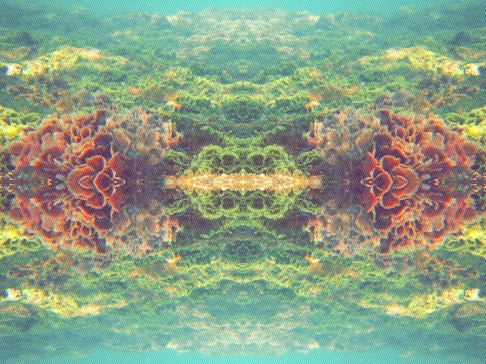 acidalgae.jpg