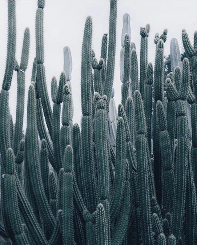 Desert patterns . . 📷: @thismintymoment . . #patternsinnature #cacti #cactus #cactusgarden #desert #desertlife #plantsmakepeoplehappy #desertplants #desertbeauty #protectourplanet #conservation #natureconservation #wildlife #travel #designingforgood #wanderlust #wonder #curiosity #beautyinnature #saveendangeredspecies #gardens #storytelling #science #design #art #protectwildplaces #protectbiodiversity #naturelove #PL_ecologies #ecologies