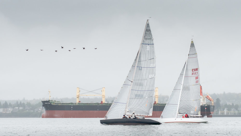 6 Metres sailing upwind with birds