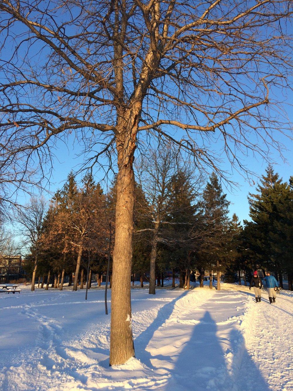 Parc Jarry, Montreal, Canadá