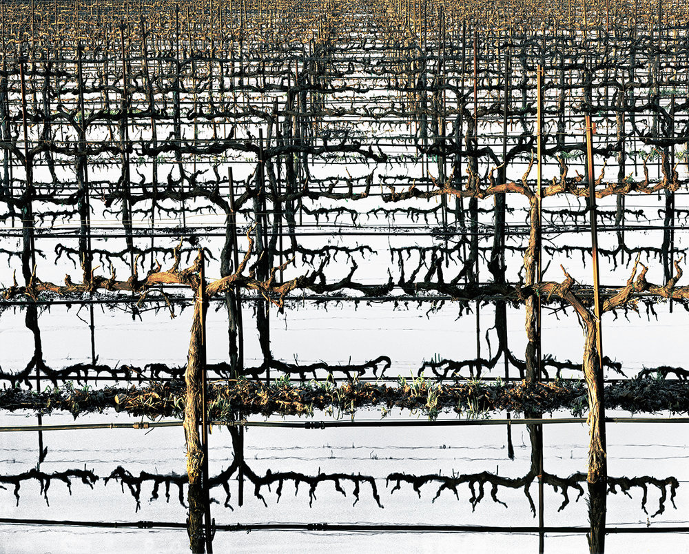 FLOODED VINEYARD, Delta