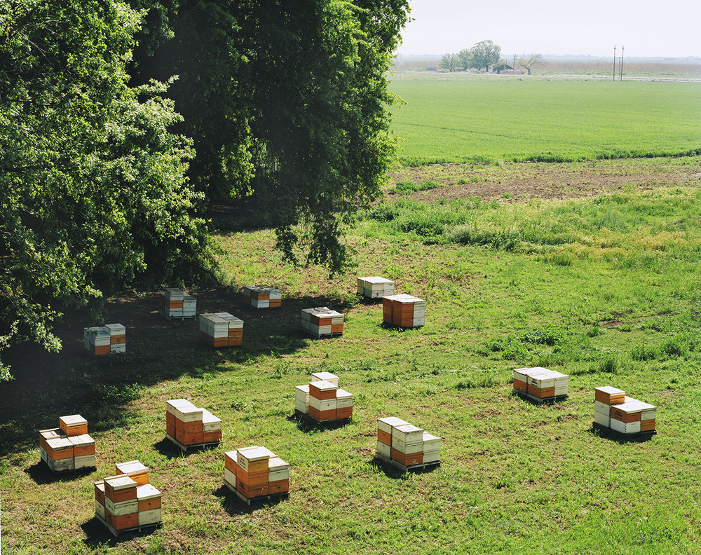 HIVES, along the Feather River