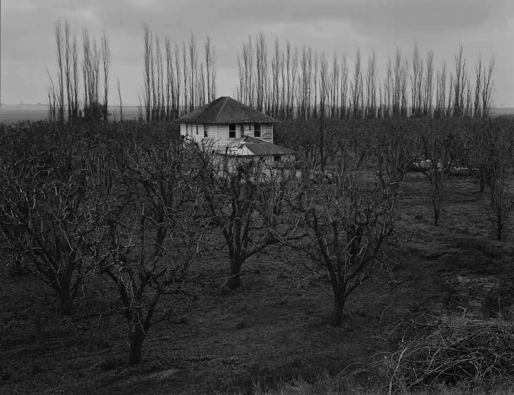 Farm house and orchard