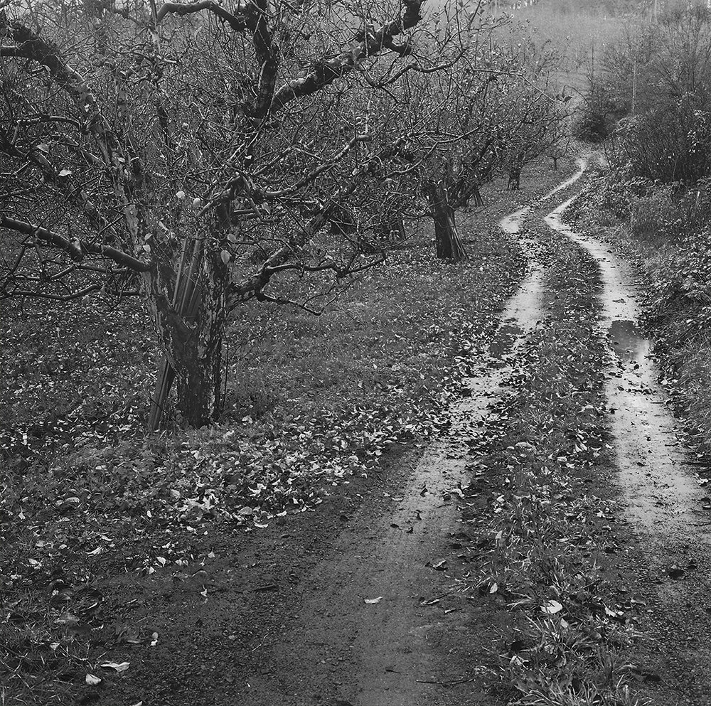 #21-orchard.jpg