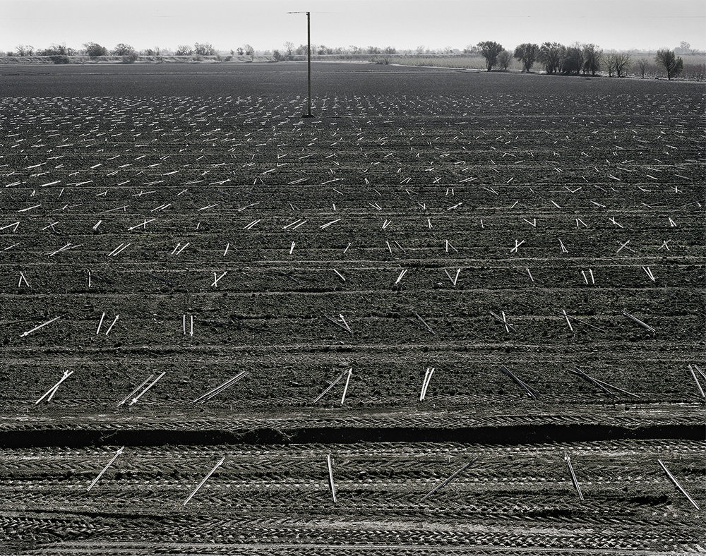 Delta field