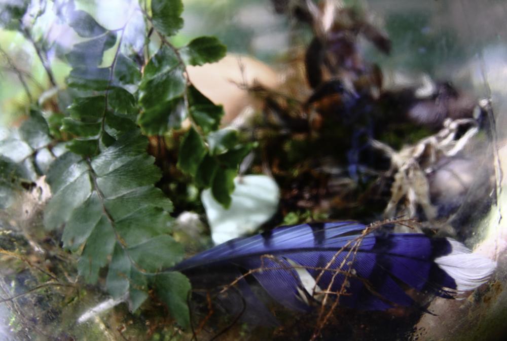 DREAMINGOF ERA - Primitive Plant Series, ©️ 2013 Stephanie C. Cosby