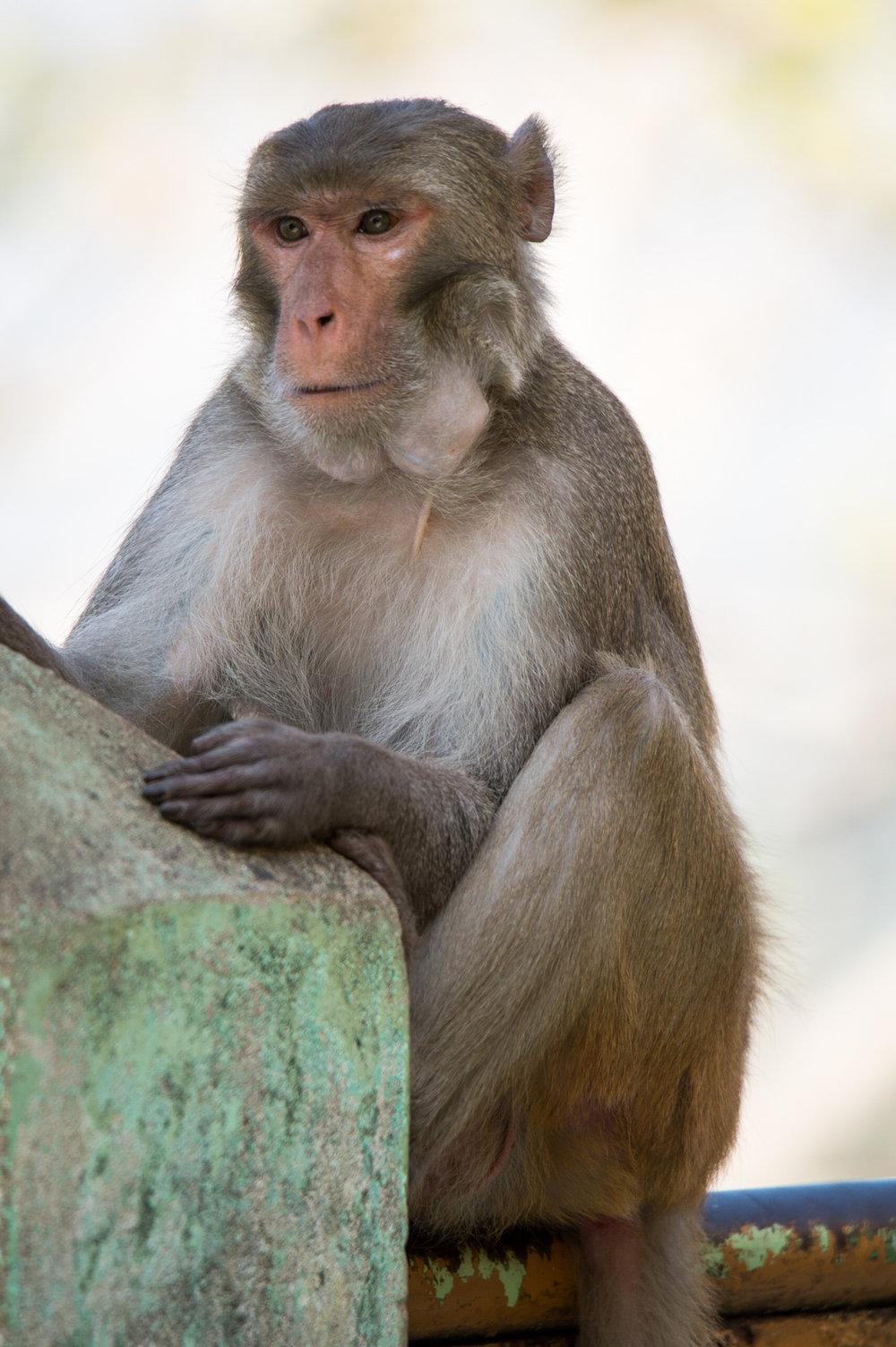 Grand. Master. Monkey.