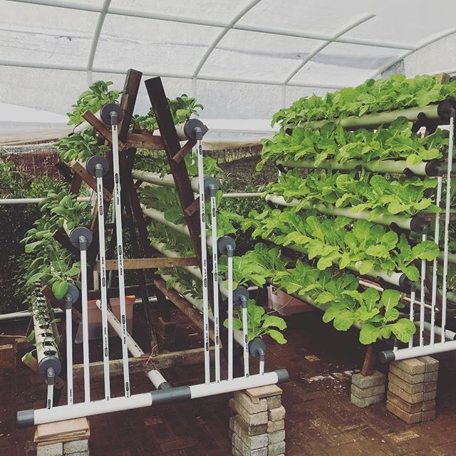 Our vertical hydrophonic installation to feed the whole bunch