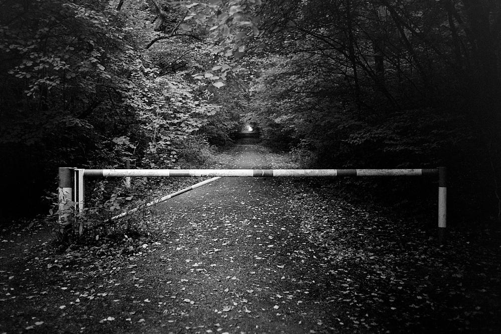 2018-08-31-1590-kronberg woods.jpg