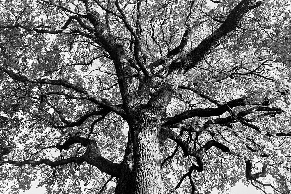 2018-10-29-2144-kronberg tree.jpg