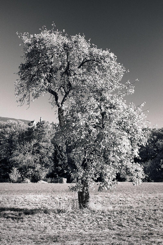 2018-11-24-2169-tree with castle.jpg