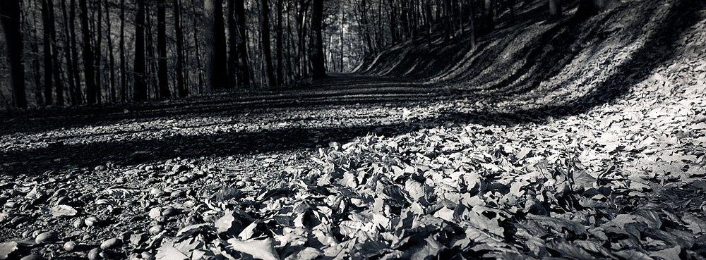 2018-11-25-2172-xpan streetpan woods.jpg