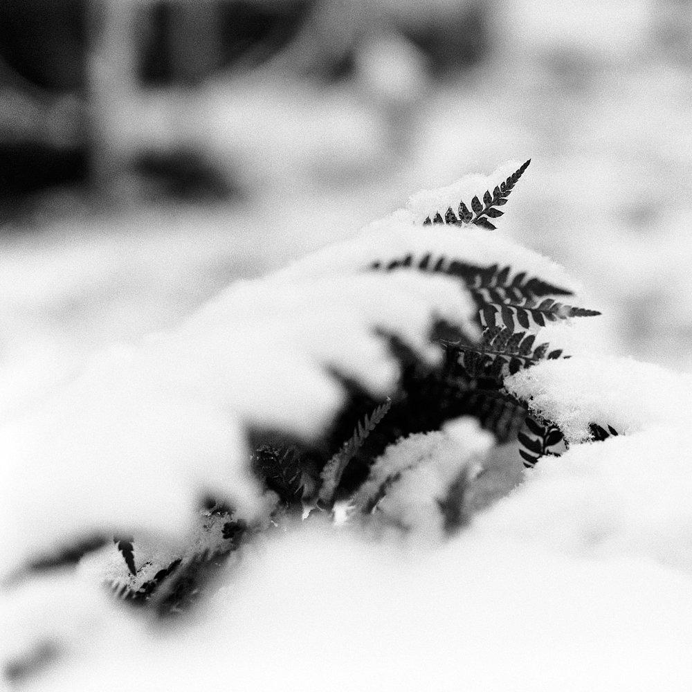 2018-12-17-2213-snow tri x.jpg