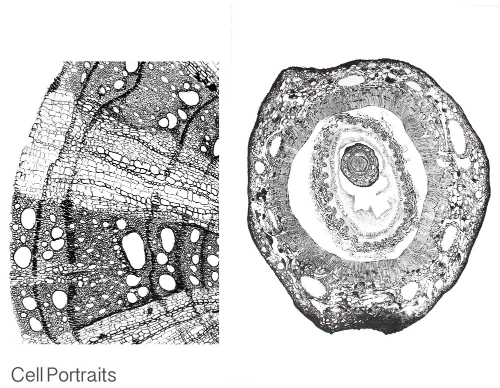 Cell portraits duo image.jpg