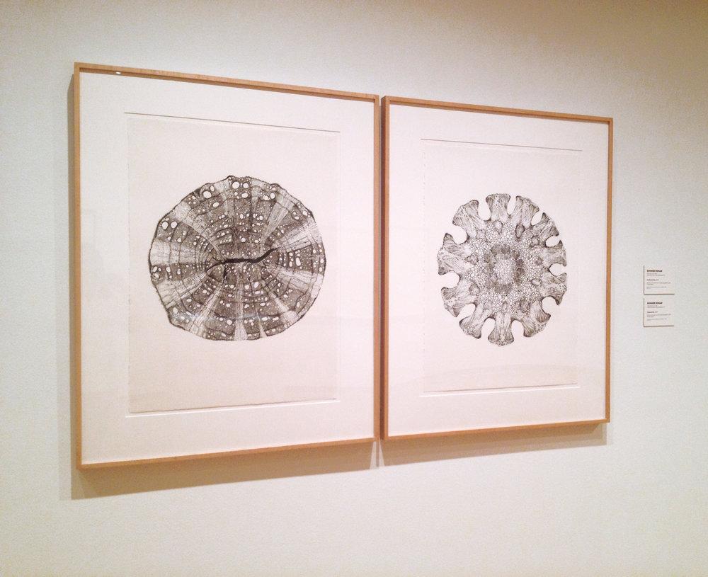 installation at Santa Barbara Museum of Art