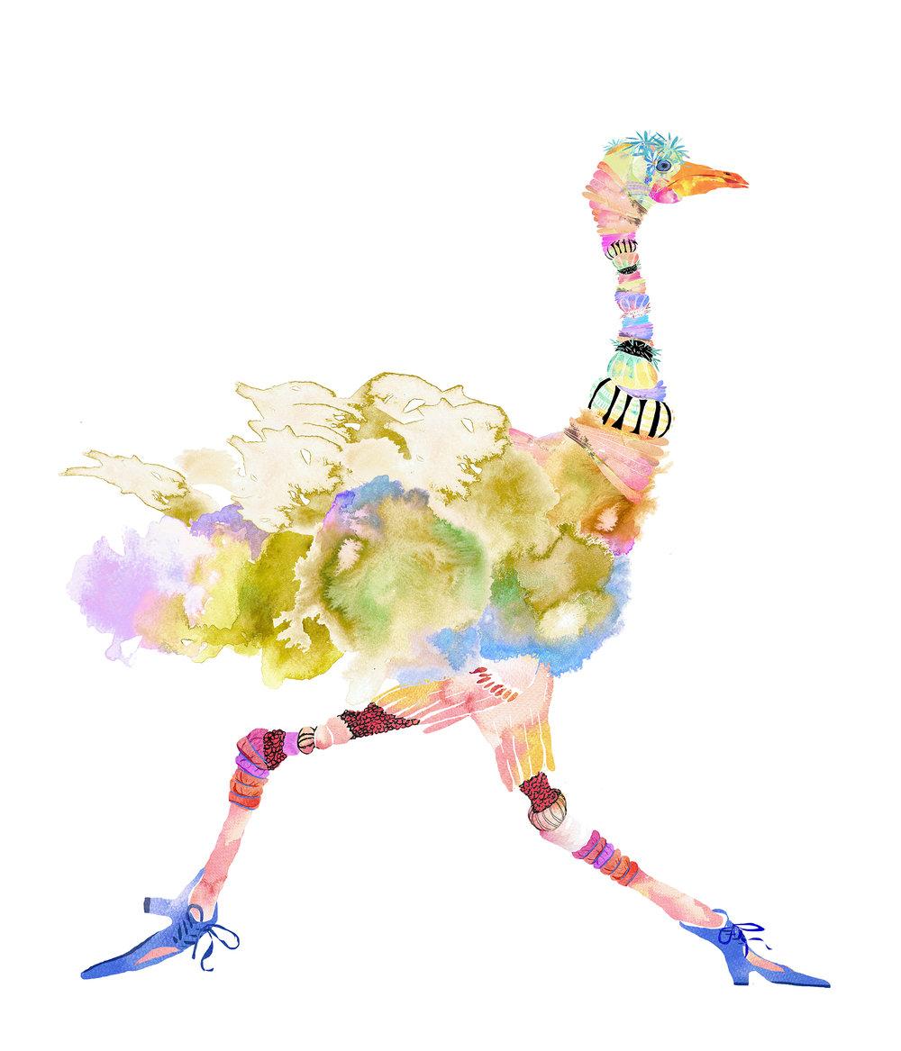 Ostrich_x.jpg