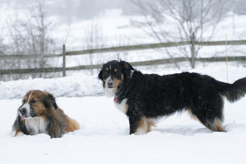 - Quigley & Maisy