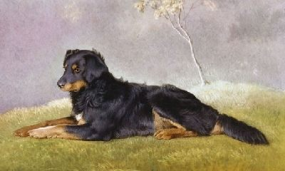 English Shepherd believed to have been owned by Queen Victoria, Fern c1870-76 painted by  Carl Schmidt .