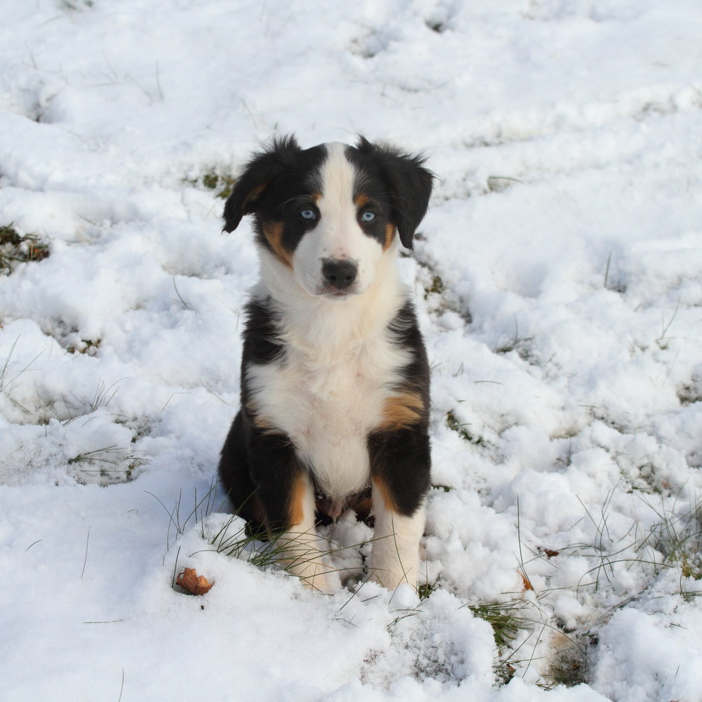 Puppy Boy #3