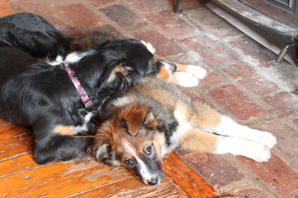 Maisie and Nymeria in front of the wood stove.JPG