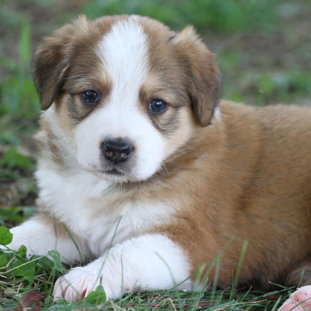 Masie_Puppies25.JPG