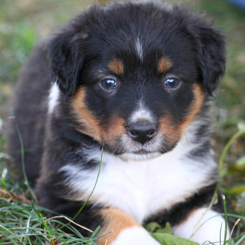 Masie_Puppies2.JPG