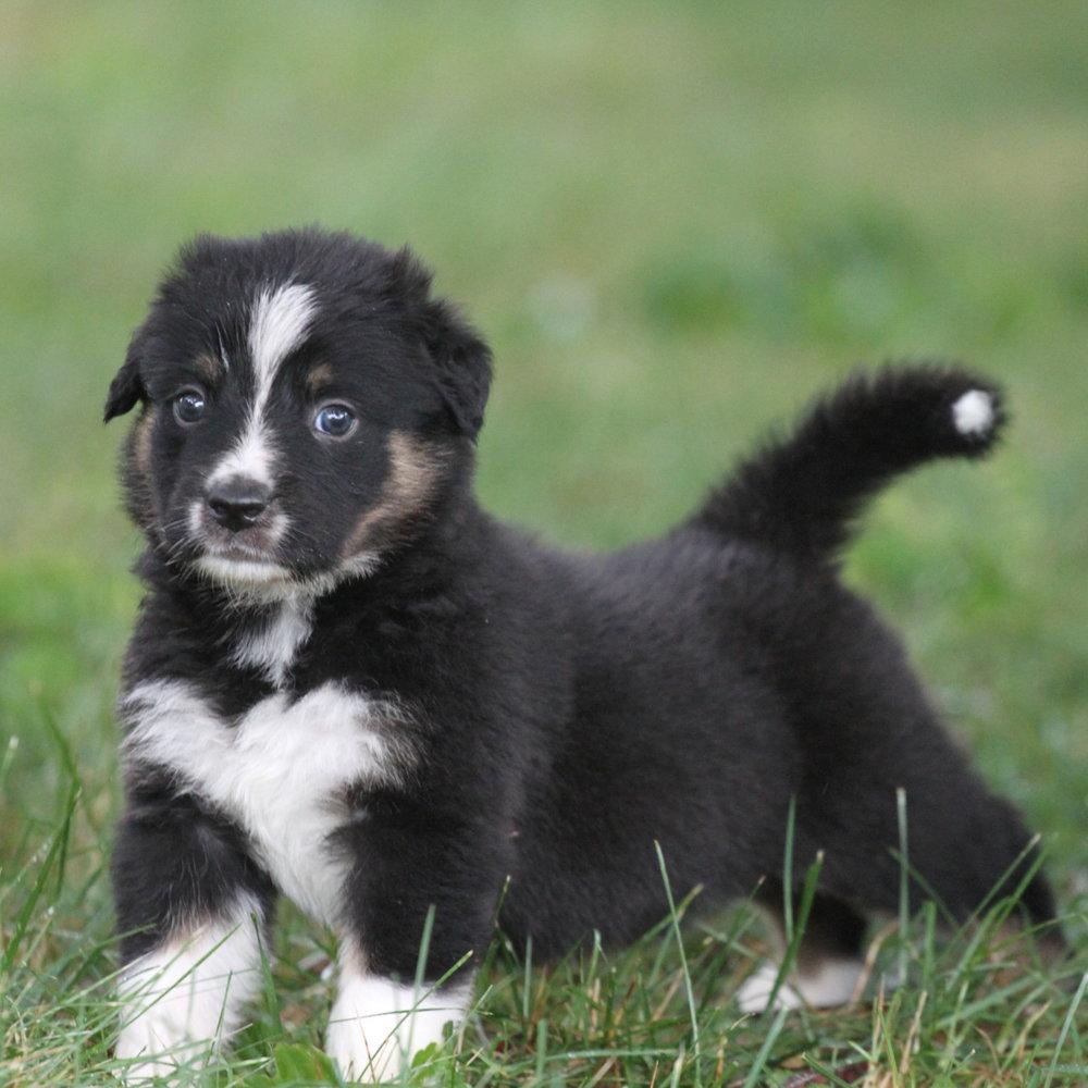 Masie_Puppies32.JPG