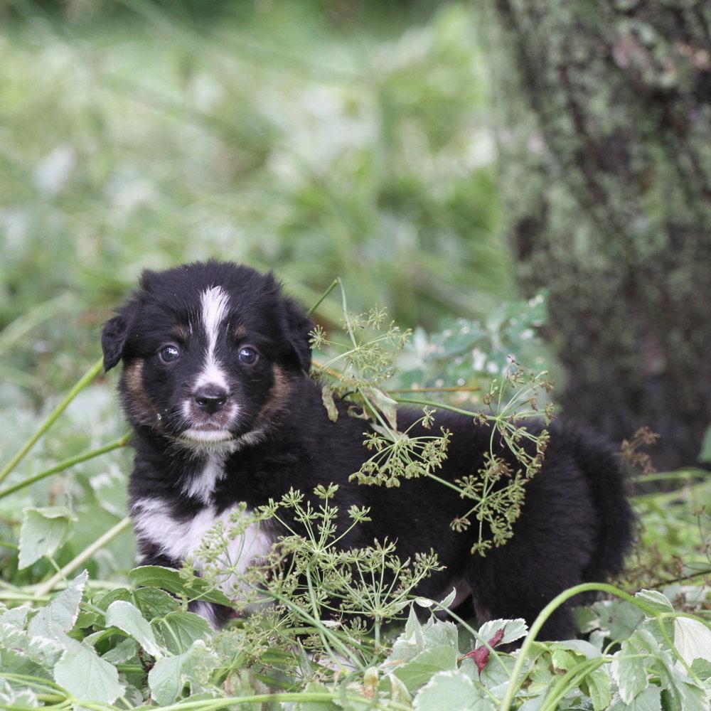 Masie_Puppies35.JPG