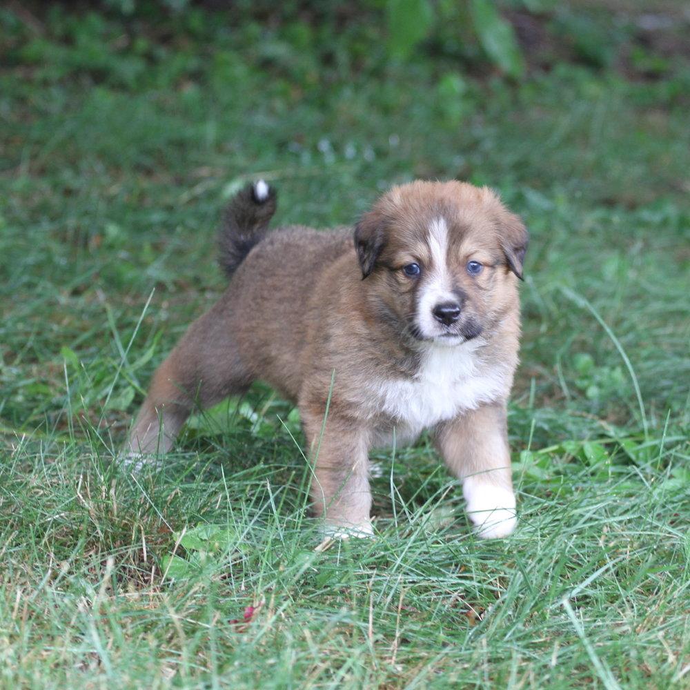 Masie_Puppies42.JPG