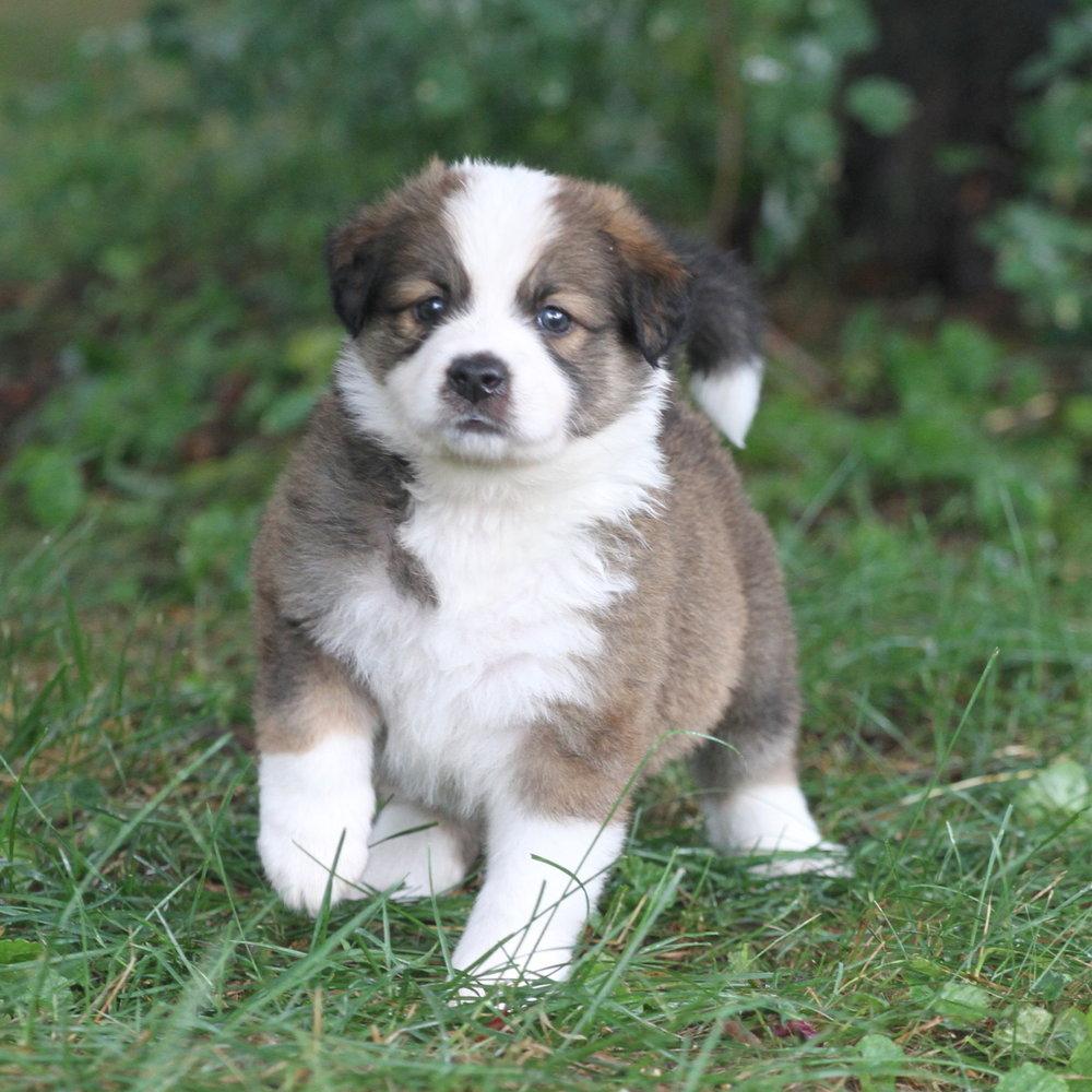 Masie_Puppies47.JPG