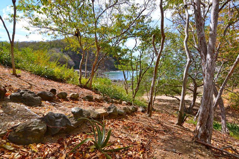 Beachfront Estate Forest.jpg