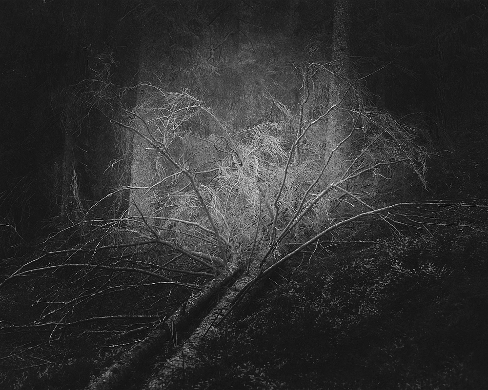 2015, Cruel Nature 5 Archival Pigment Print